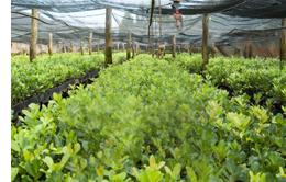 plantage.jpg
